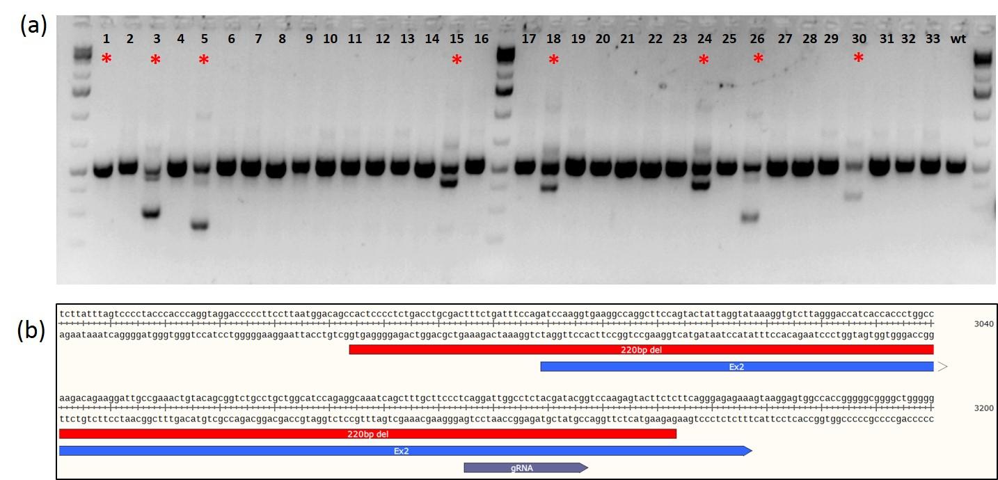 CASESTUDY-Rat-CRISPR-KO-3