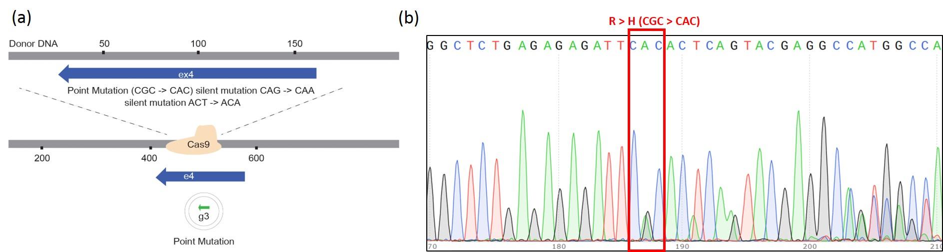 CASESTUDY-Rat-CRISPR-PM-2