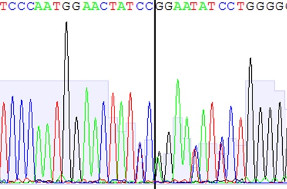 Figure 2  image - CRISPR Cell Line and Cas9 Gene Editing Figure 2