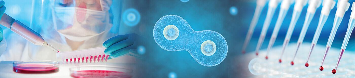 Stem Cell Derivation