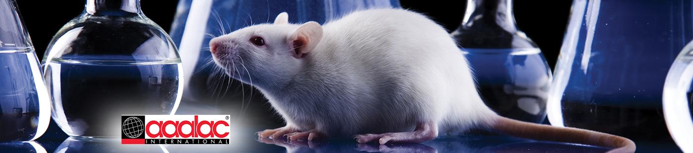 Rat Models
