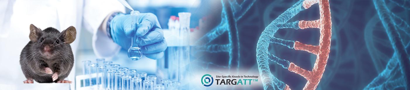 TARGATT™ Genome Editing