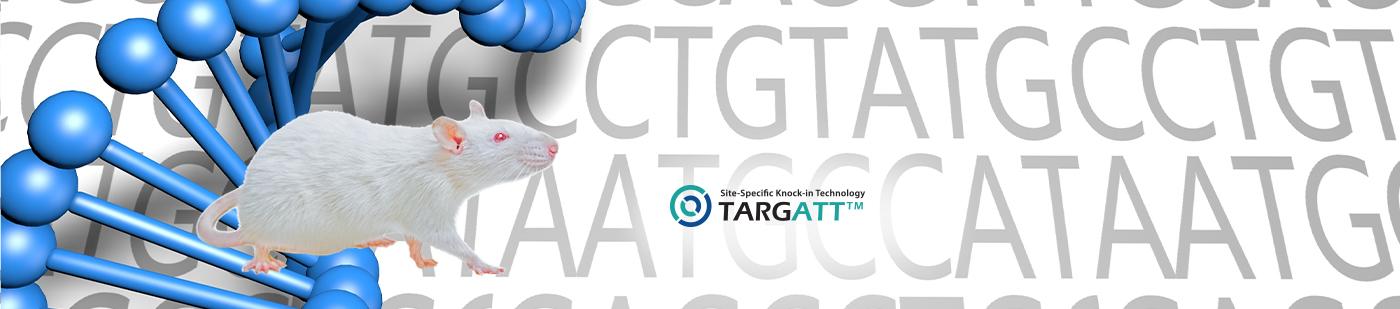 TARGATT™ Site-Specific Knock-in Rat