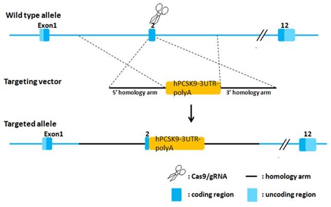 Landingpage-ASHU-00075-PCSK9-HU-ICPMouse-1.1