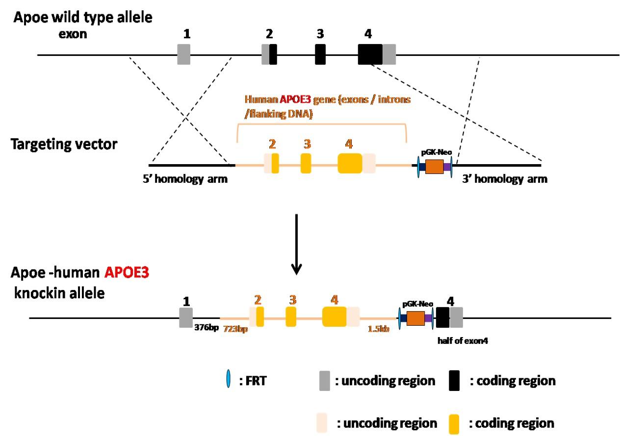 Landingpage-ASHU-190003-APOE3-HU-ICPMouse-1
