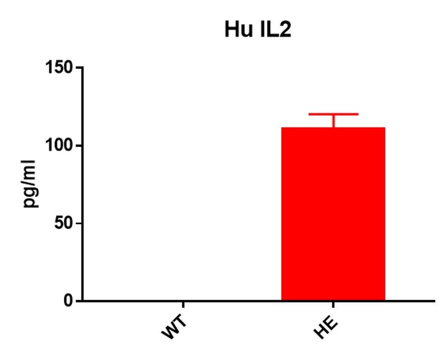 Landingpage-ASHU-190048-IL2-HU-ICPMouse-2