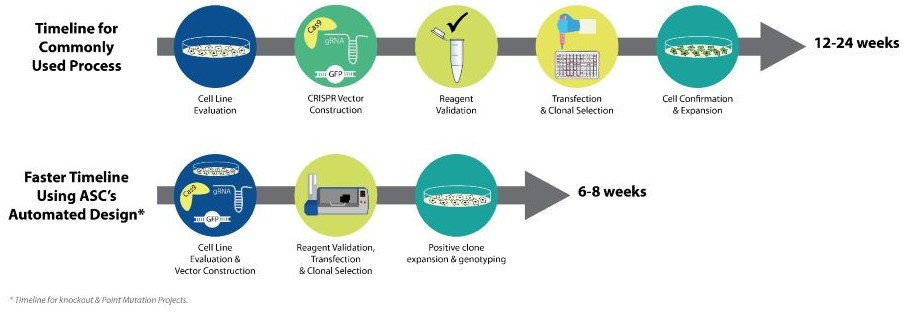iPSC Genome Editing Service Workflow - Knockout iPS Cells