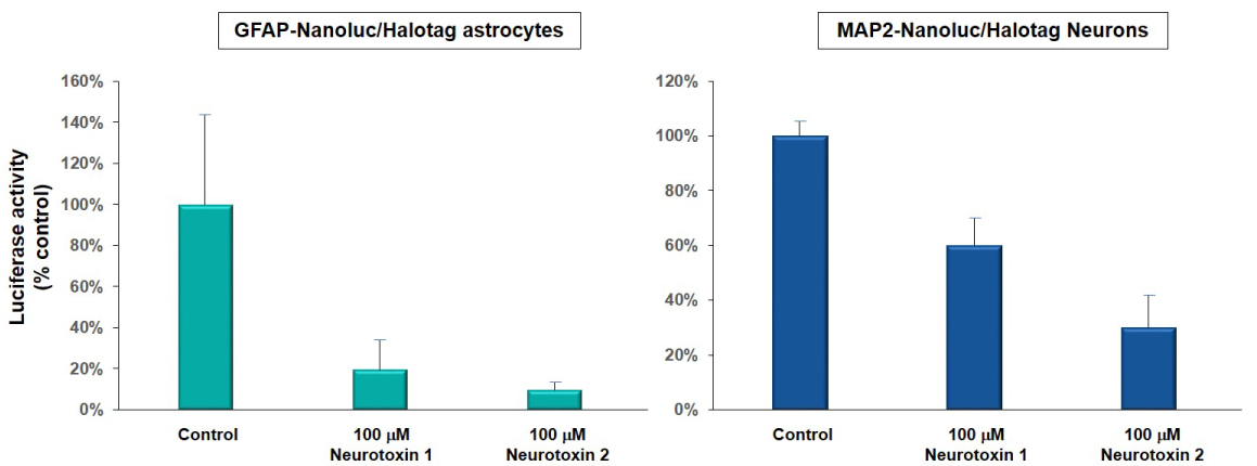 Graphs of cell viability of astrocytes and neurons during drug toxicity testing
