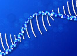 Monoclonal Antibodies - Single B Cell mRNA Amplification