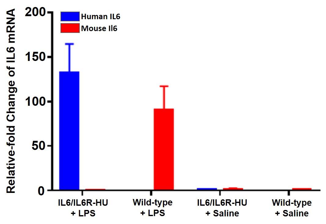 appnote-animalmodel-mouserepository-cytokine-1