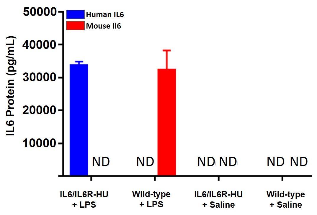 appnote-animalmodel-mouserepository-cytokine-2