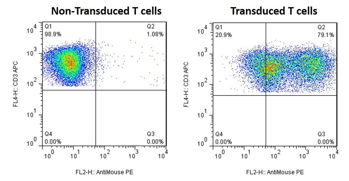 viruspackaging-primary-tcell-lentivirus-transduction-1