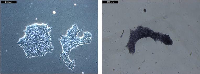 webpage-ASE-9209-morphology-AP
