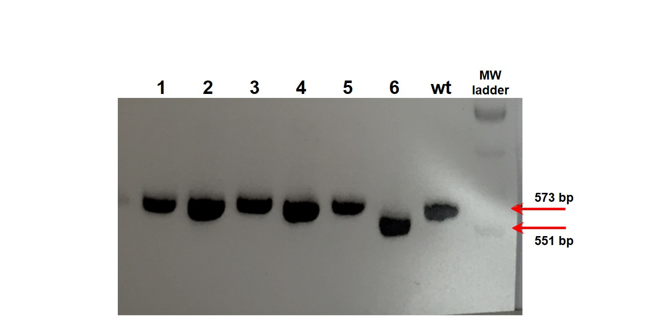 casestudy-service-stemcell-genomeediting-3a
