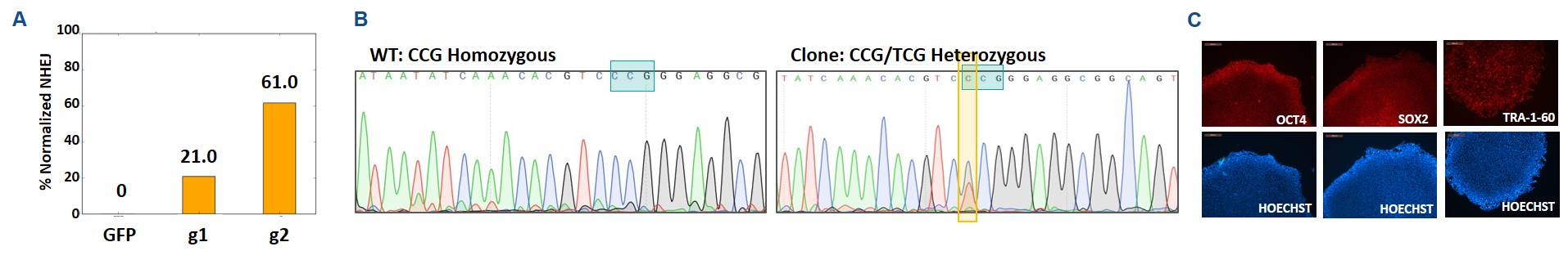 CASESTUDY-CRISPR-iPSC-pointmutation-nosilentmutation