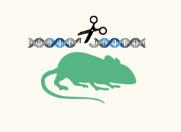 Other Gene Edited Mouse Models