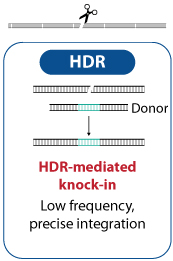 HDR-mediated knock-in Low frequency, precise integration