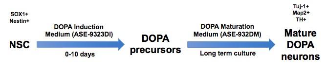 landingpage-dopamine-induction-media-ase-9323di-schematic