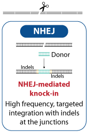 NHEJ-mediated knock-in High frequency, targeted integration with indels  at the junctions