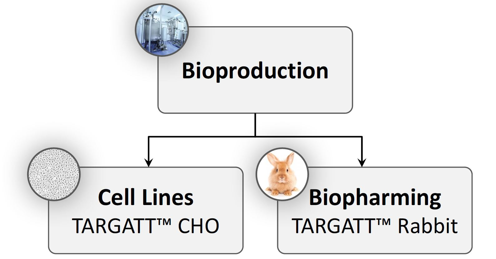 Applied StemCell Bioproduction Details