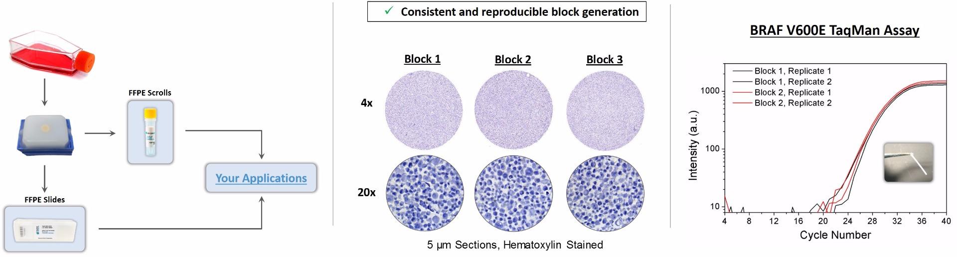 TECHNICAL-ONCOREF-MAPK-FFPE-cellline-blocks