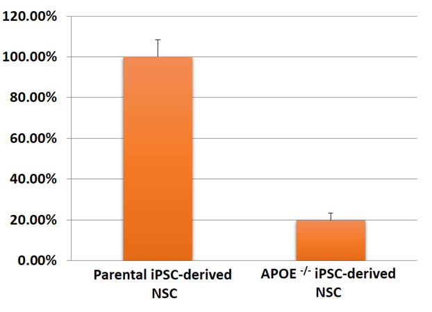 Image 4 - Expression of APOE in NSC by qPCR in iPSC Lines