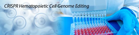 CRISPR Hematopoietic Cell Genome Editing Image - CRISPR cell line hematopoietic cell genome editing