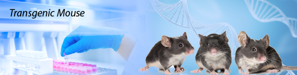 knockout mouse model Transgenic mouse banner