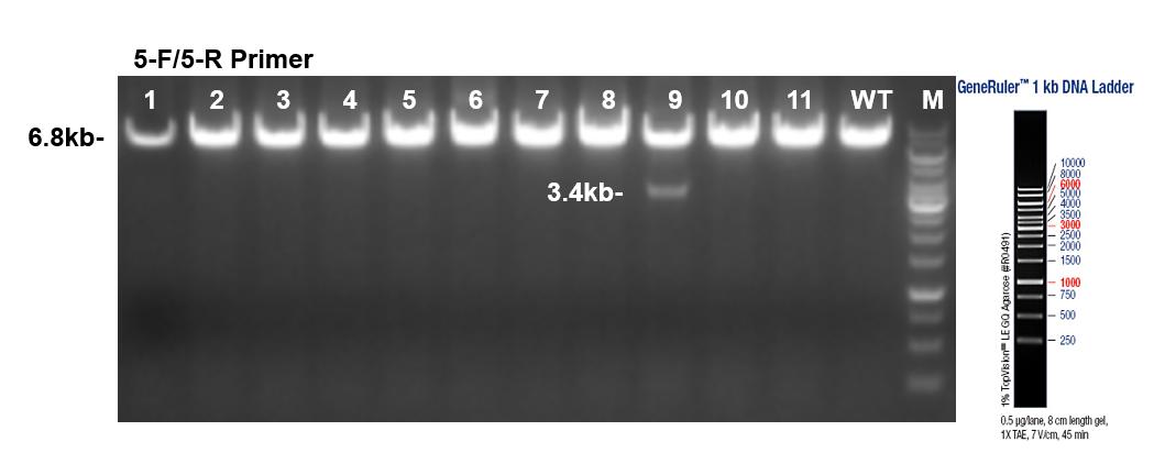PCR Identification Image 1