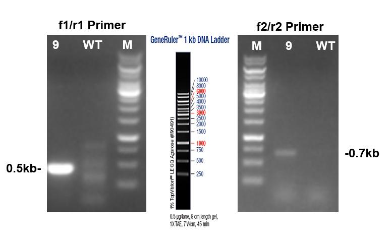 PCR Identification Image 2