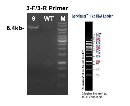 PCR Identification Image 3