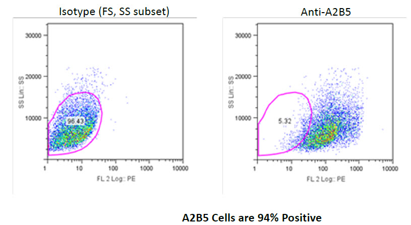 A2B5 cells FACS analysis