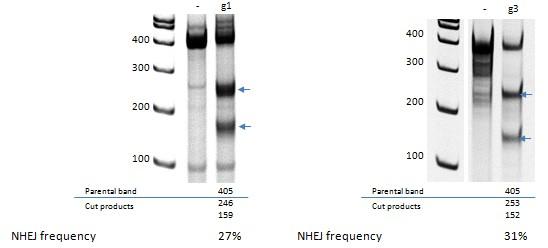 Case Studies Figure 1 - IPSC Disease Modeling